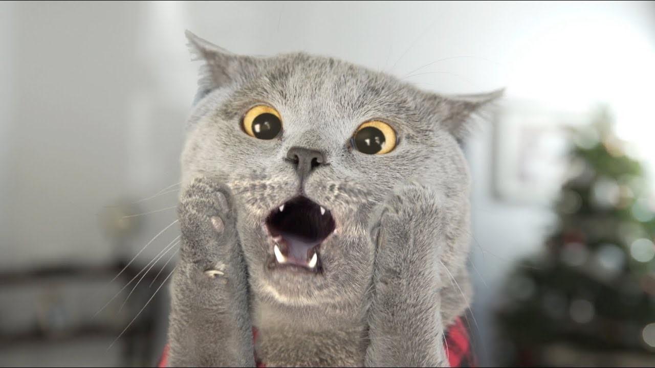 搞不清貓咪到底吐了什麼