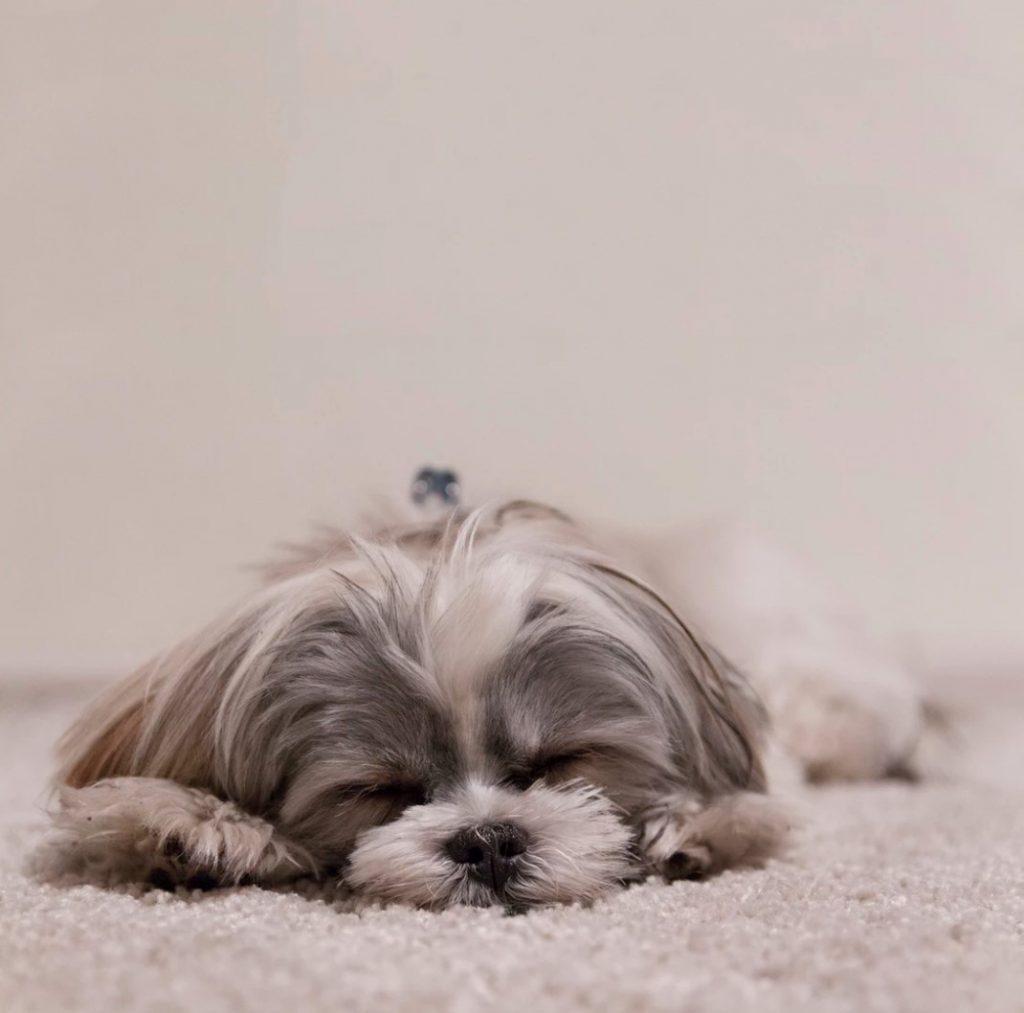 狗狗會作夢嗎?