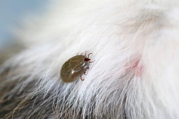 教你如何預防狗狗皮膚病!