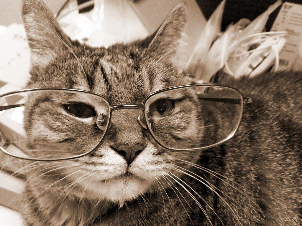 如何照顧老貓?老貓有哪些徵兆呢?