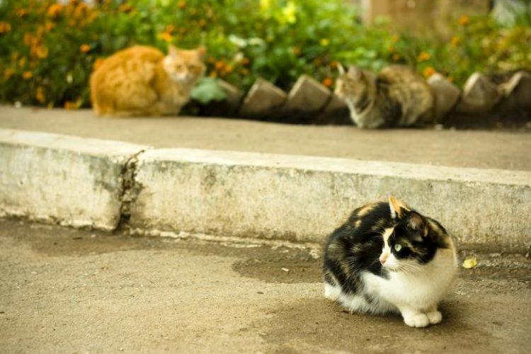 炎熱潮濕 小心貓濕疹找上門