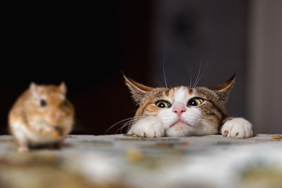 貓的報恩?!