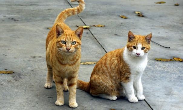 貓的報恩!?