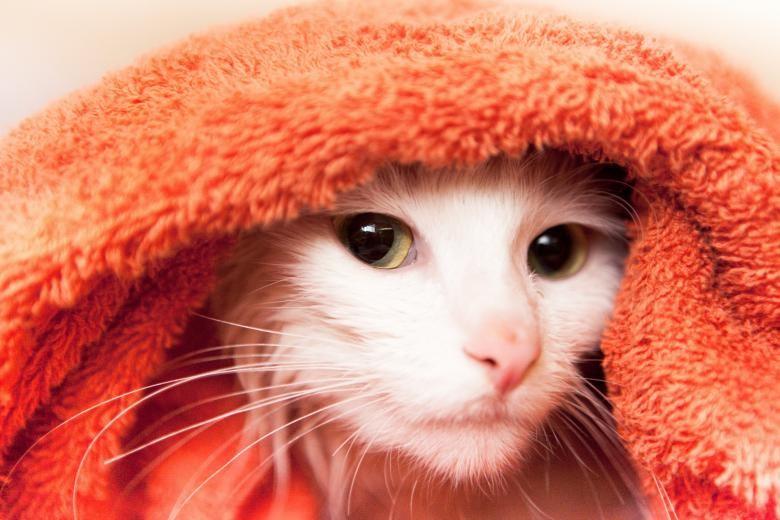 如何幫貓星人洗澡?
