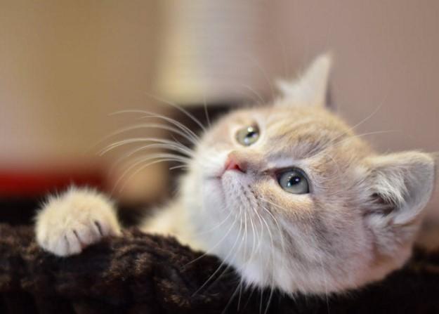 貓咪可以吃什麼人類食物?