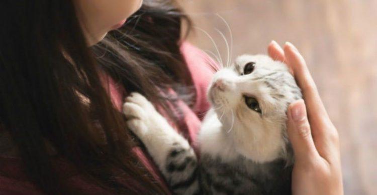 新手貓奴不慌張!剛開始養貓時到底要準備甚麼物品呢