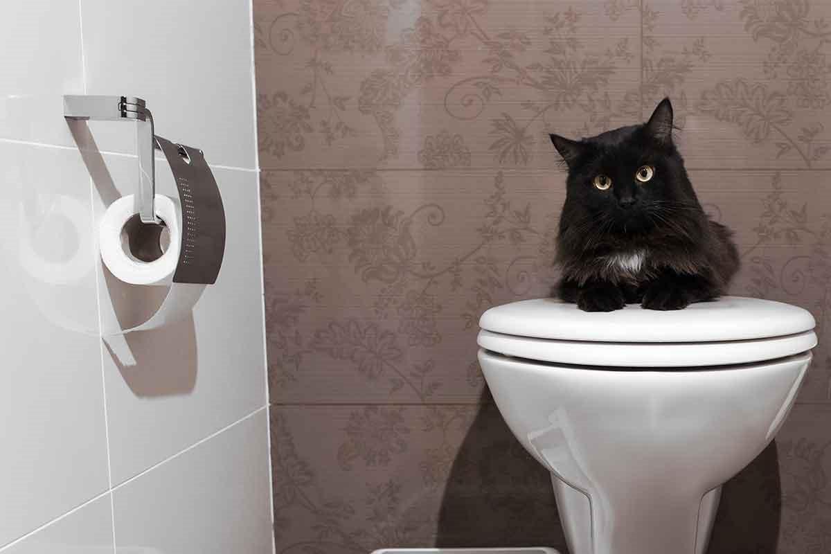 為什麼貓咪老愛跟進廁所?原來是因為...