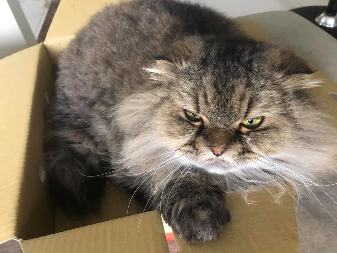喵星人心理學:原來貓咪愛紙箱是這原因!