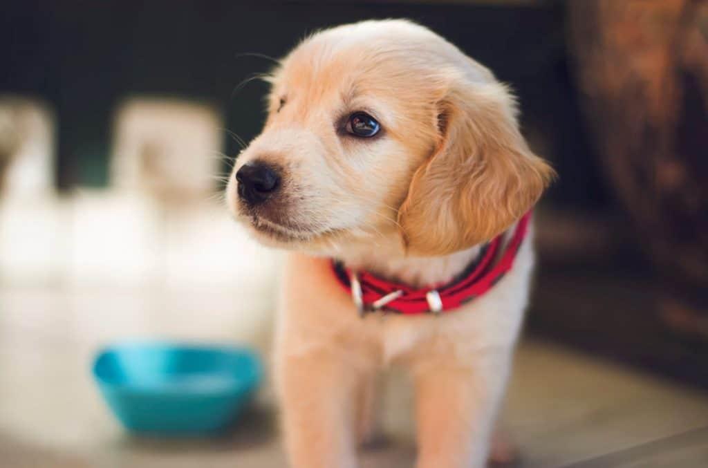 你可能不了解?! 關於狗狗的十件事!