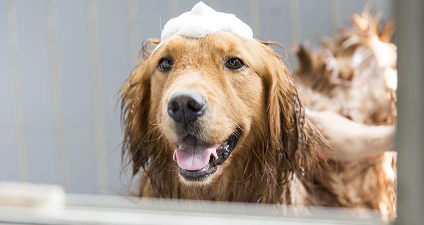 狗狗人類皮膚大不同!如何選擇毛孩的洗澡產品呢?!