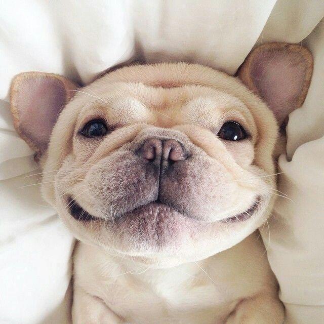 狗狗體味臭臭怎麼辦?是生病了嗎?