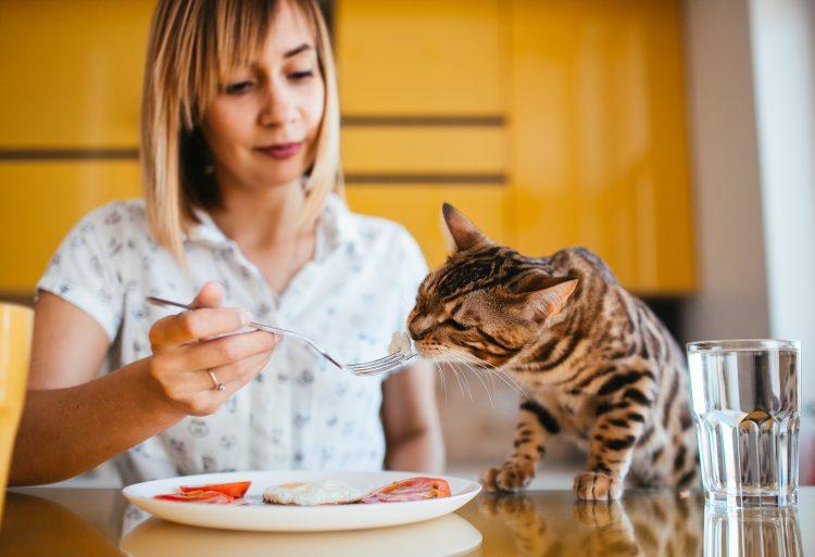 寵物鮮食食譜DIY