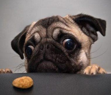 如何挑選狗狗的肉乾呢?